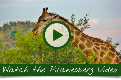 Pilanesberg-Video-Home