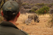 Rhino-thumb