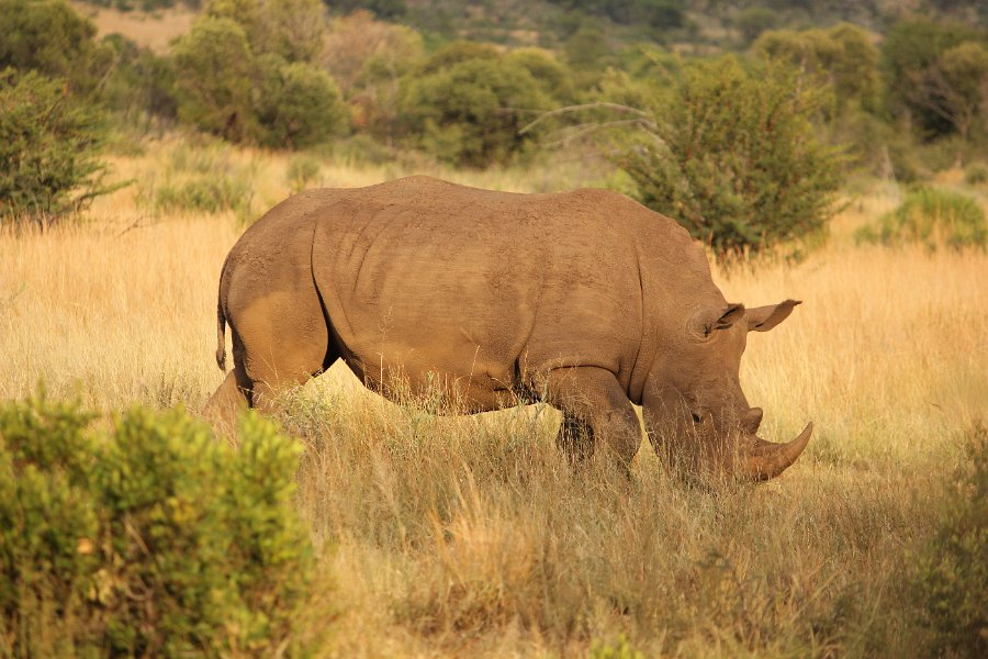 "The Debate Over ""Advertizing"" Pilanesberg's Rhinos"