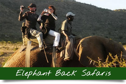 Elephant-back-safaris