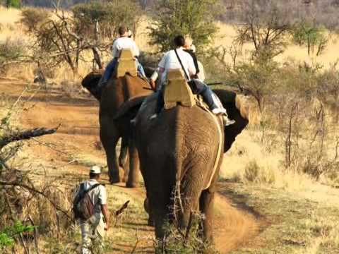 Sun City Elephants to Retire to Pilanesberg?