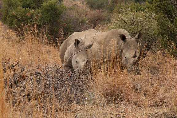 rhino tracking 2