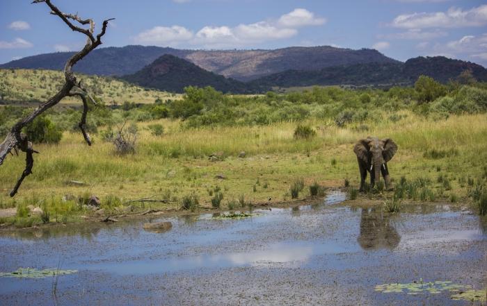 4 Reasons to Visit Pilanesberg in Summer