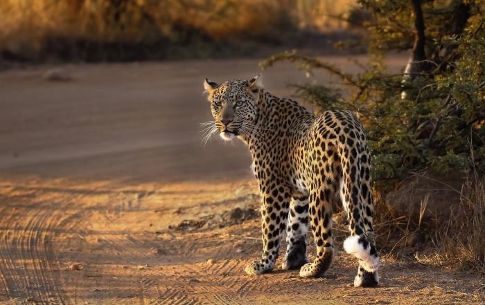 Pilanesberg 2015 in images