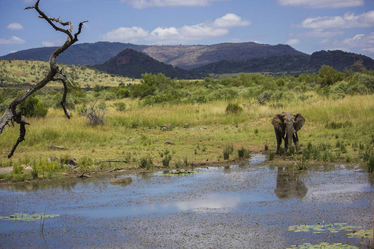 Experience Pilanesberg in a day