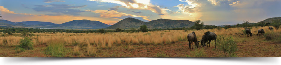 Pilanesberg-National-Park