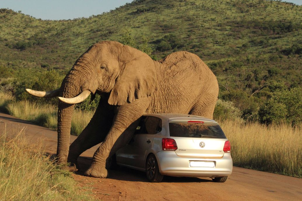 Elephant Scratch An Itch With A Car in Pilanesberg