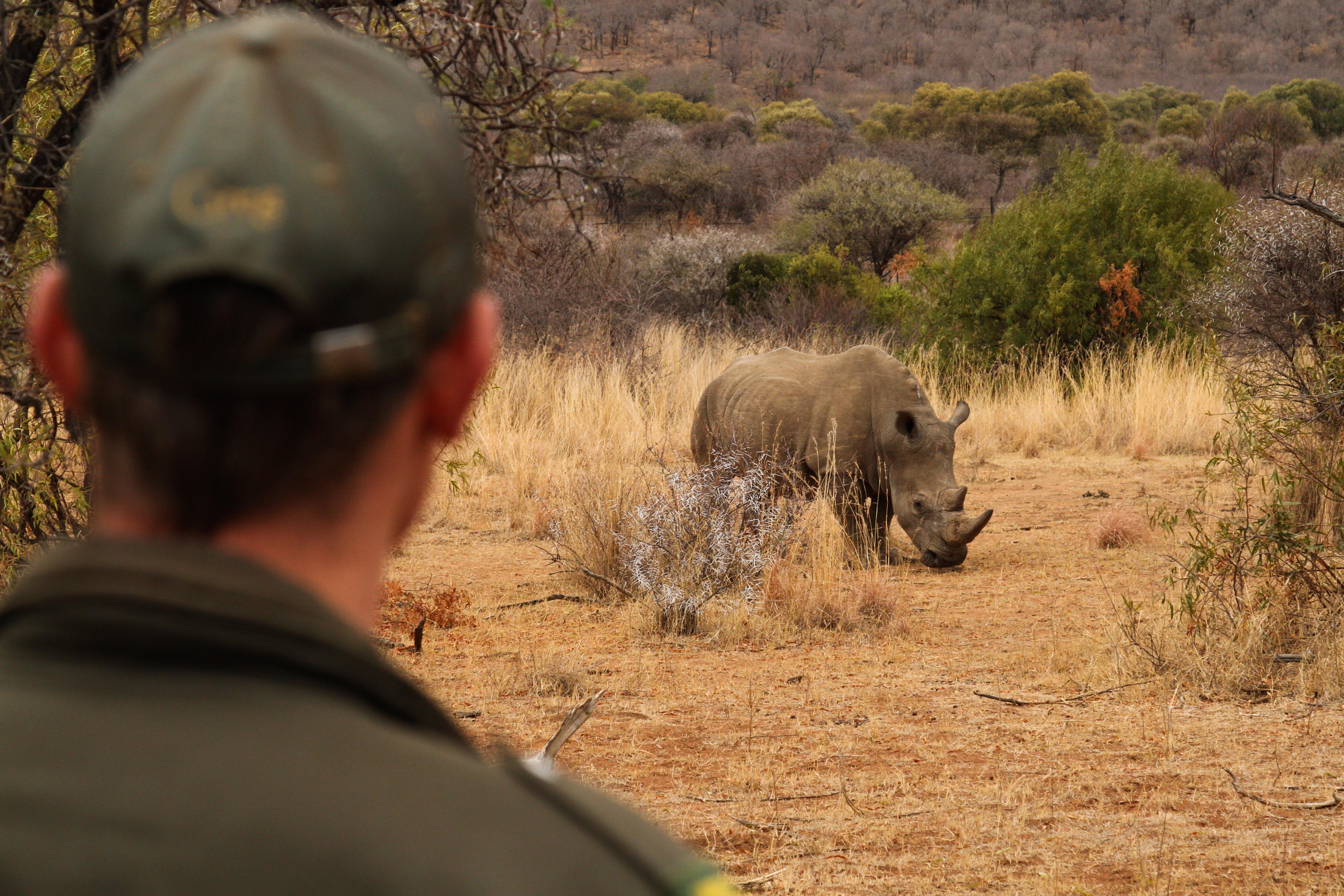 Balloon Artists Help Pilanesberg's Rhinos