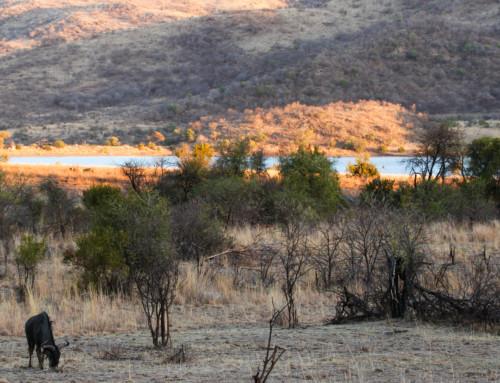 A Wild Week in the Pilanesberg