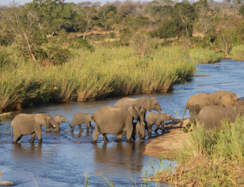 Elephant corridors essential for the species and environment