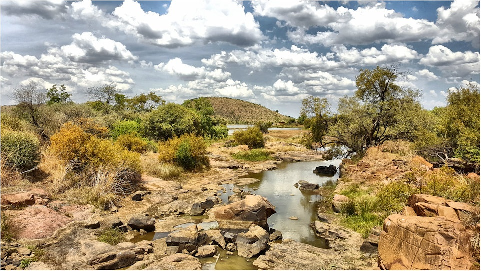 TRAVELLER TAILS: Green, gold and patriotism in the Pilanesberg